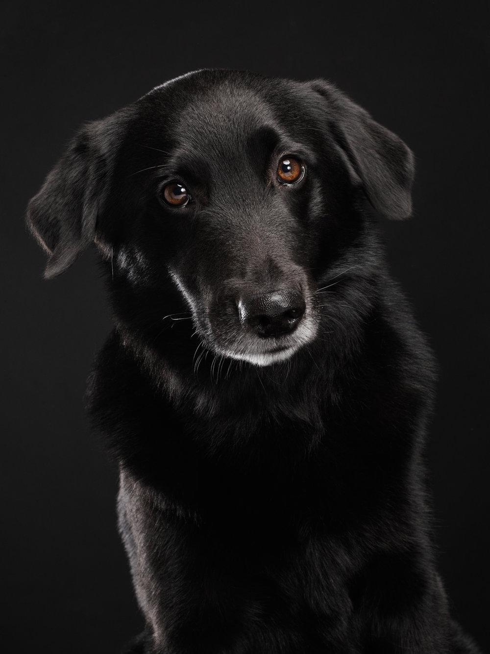 studio-dogs-klausdyba-30.jpg