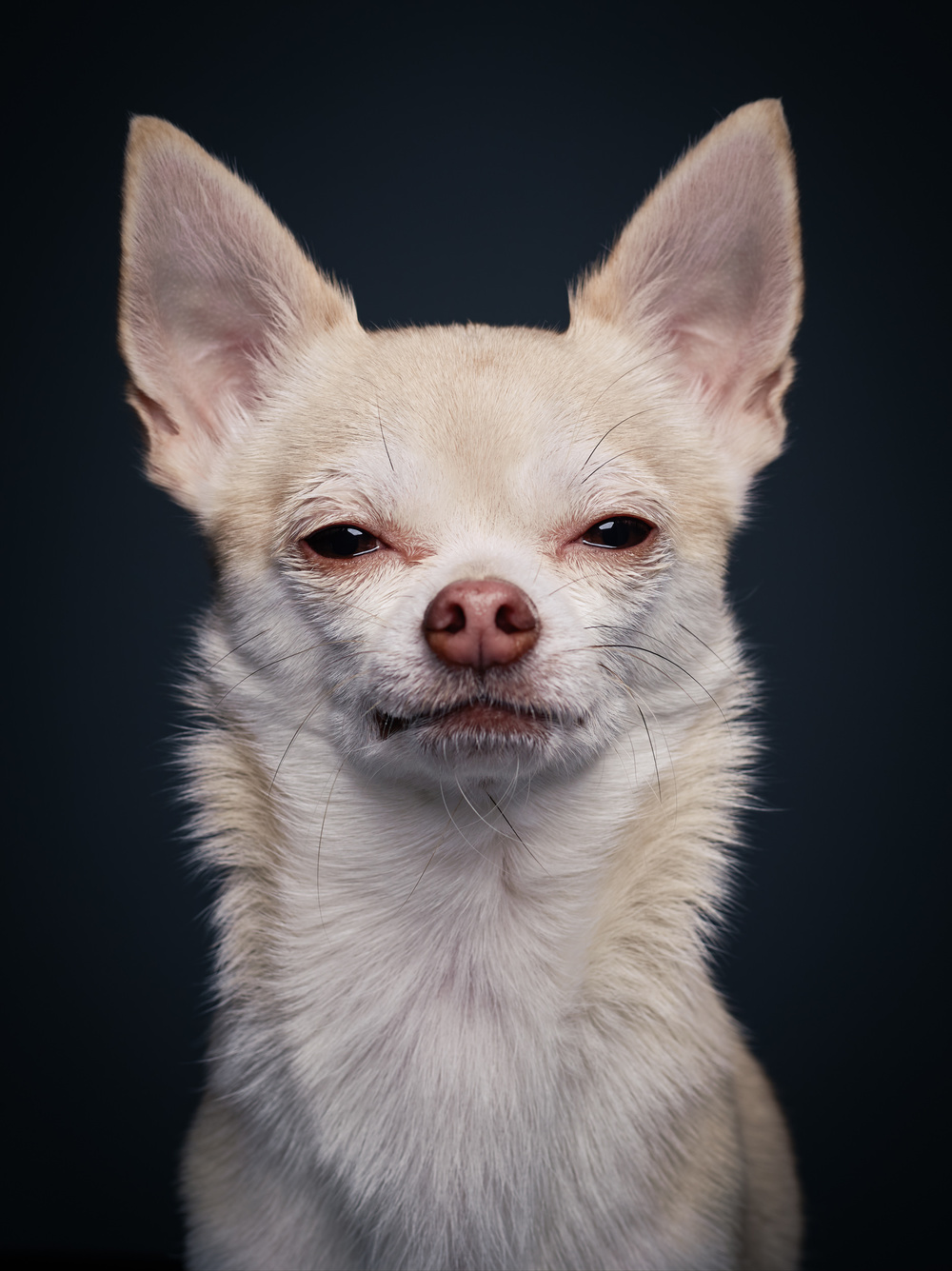 studio-dogs-klausdyba-1.jpg