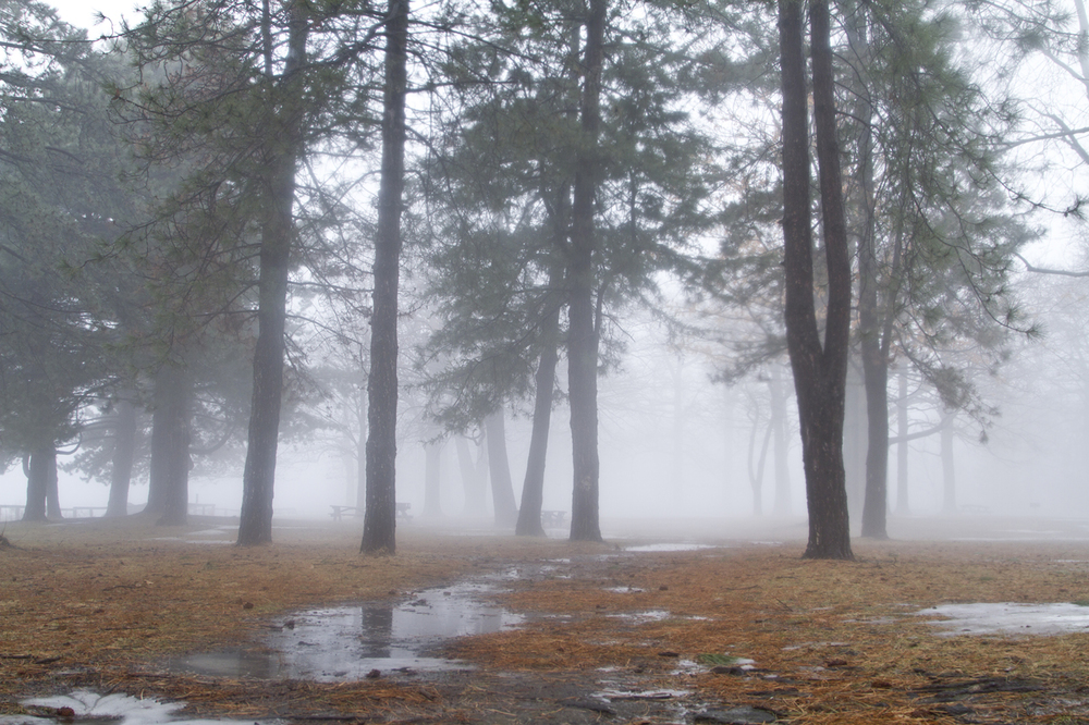Fog10_7.jpg