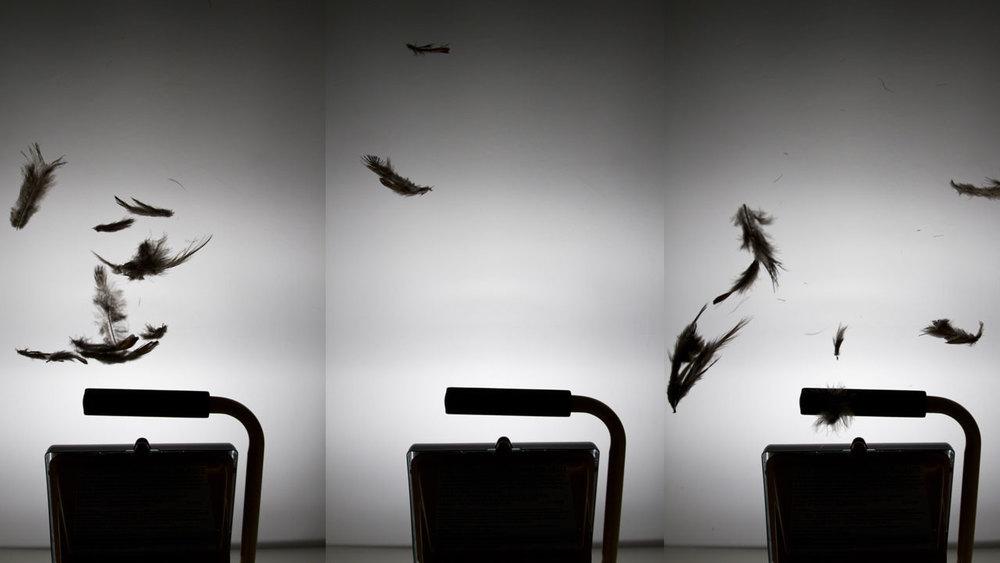 Brett_Ruiz_feathers_falling.jpg