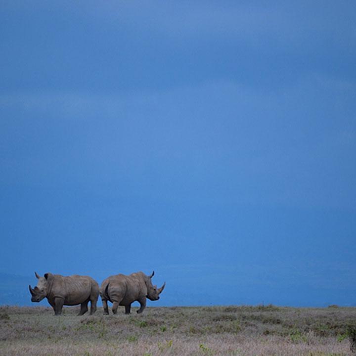 UNF_Imagery_0003_Rhinos.jpg