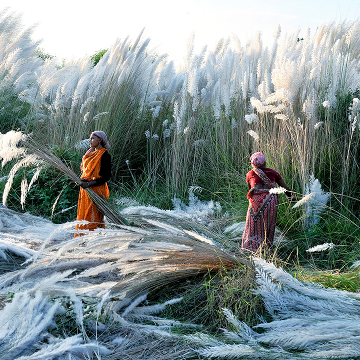 UNF_Imagery_0001_kash-harvest-india-c.jpg