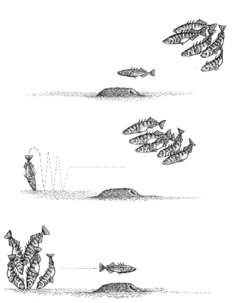 tufte fish web.jpg