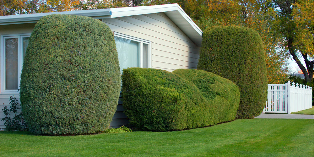 Neatly-Trimmed-Shrubs--233526 CROPPED 600x300.jpg