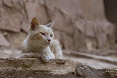 homeless feline, cat, cats in rome, rome cat, rome tours