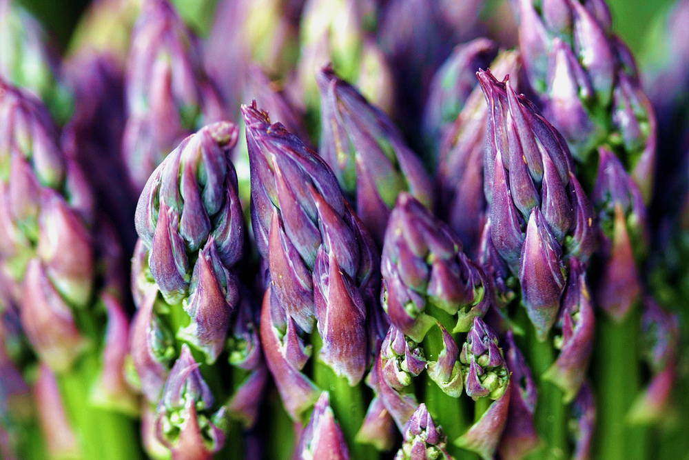 tours of rome asparagi