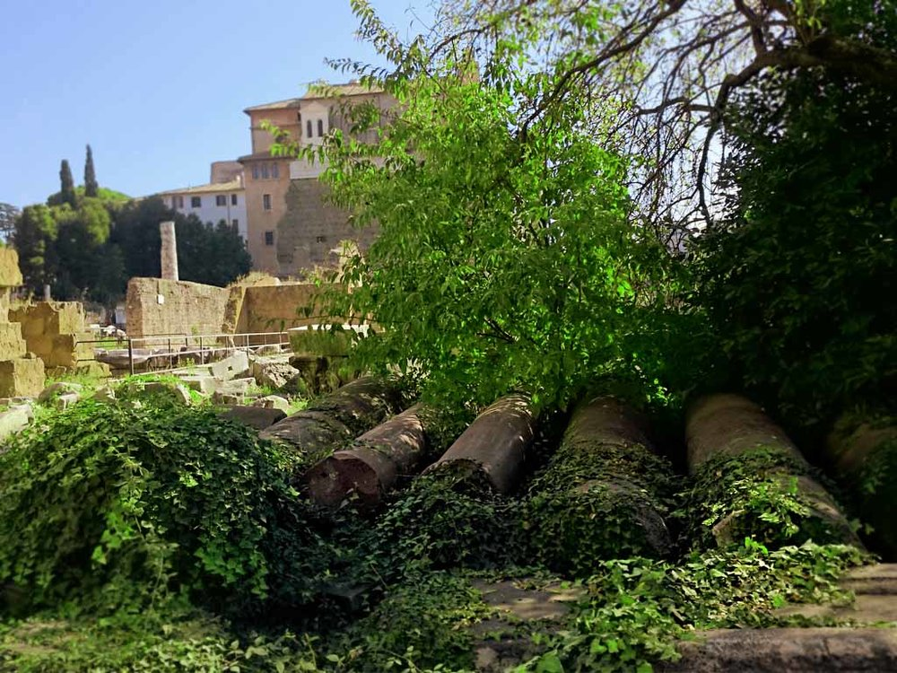 Abandoned columns in the Roman Forum