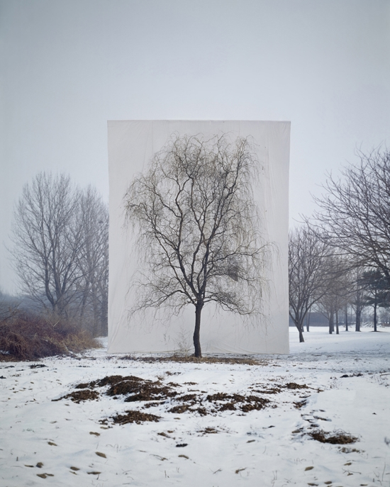 """Tree #3""   by Myoung Ho Lee"