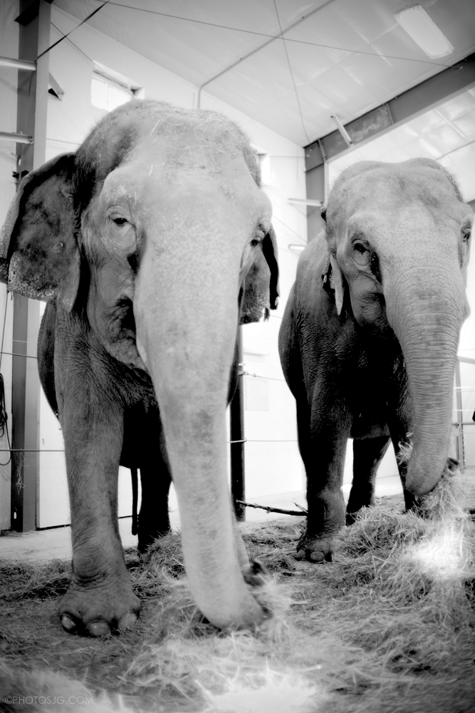 Hope.ElephantsJEG_7634.jpg