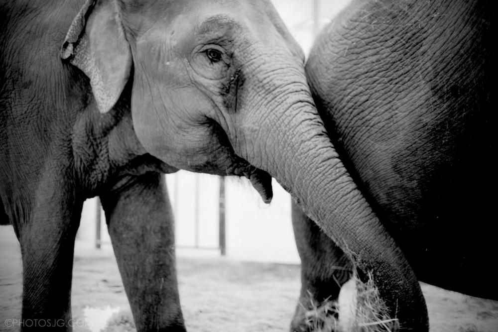 Hope.ElephantsJEG_7612.jpg