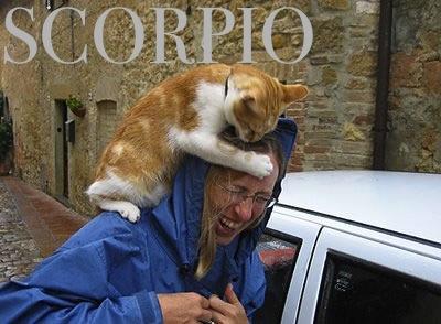 87 cat attack