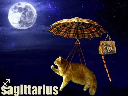 sagittarius kosmo kitty.jpg