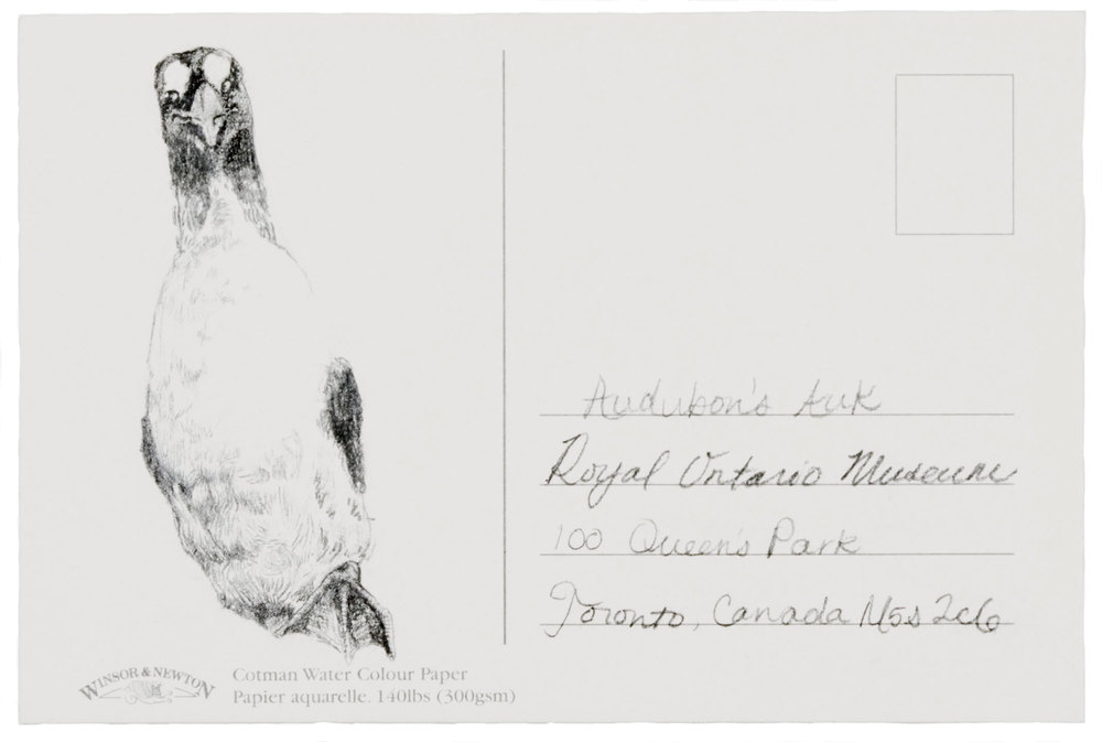Audubons-Auk-Elena-Peabody.jpg
