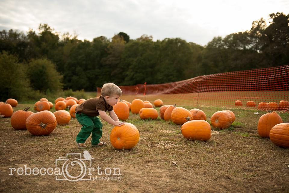 4-pumpkins2013.jpg
