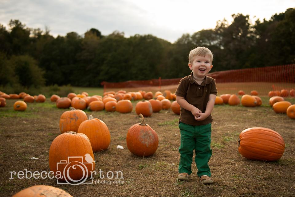 5-pumpkins2013.jpg