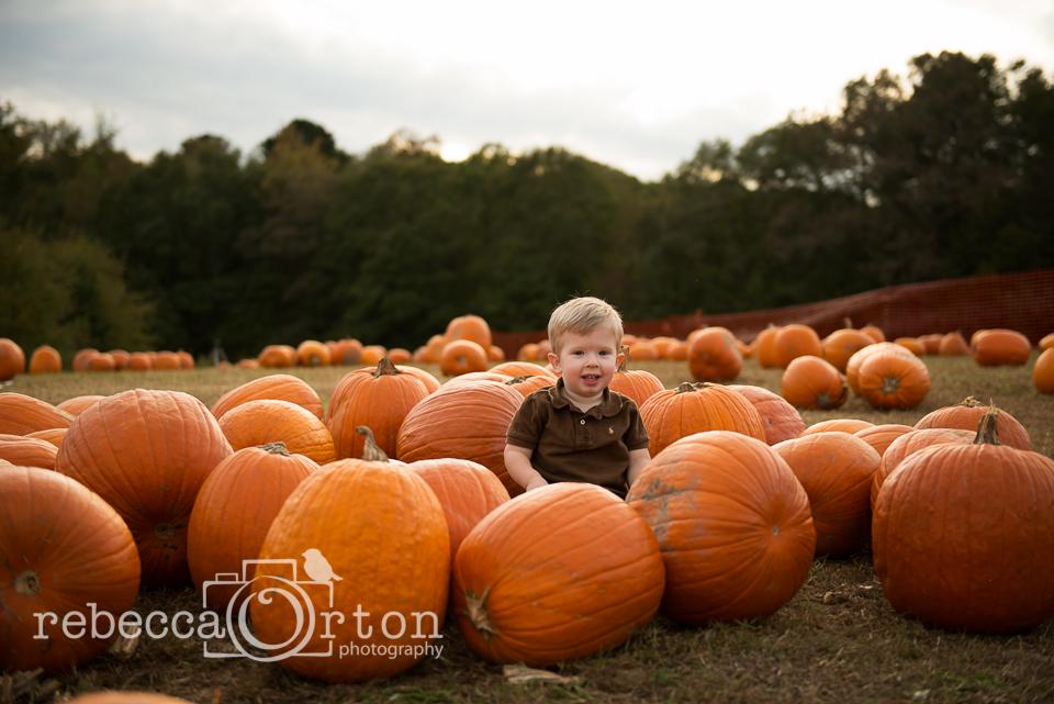 6-pumpkins2013.jpg