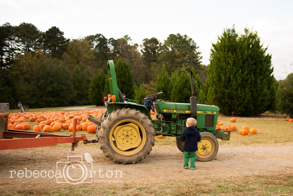 7-pumpkins2013.jpg