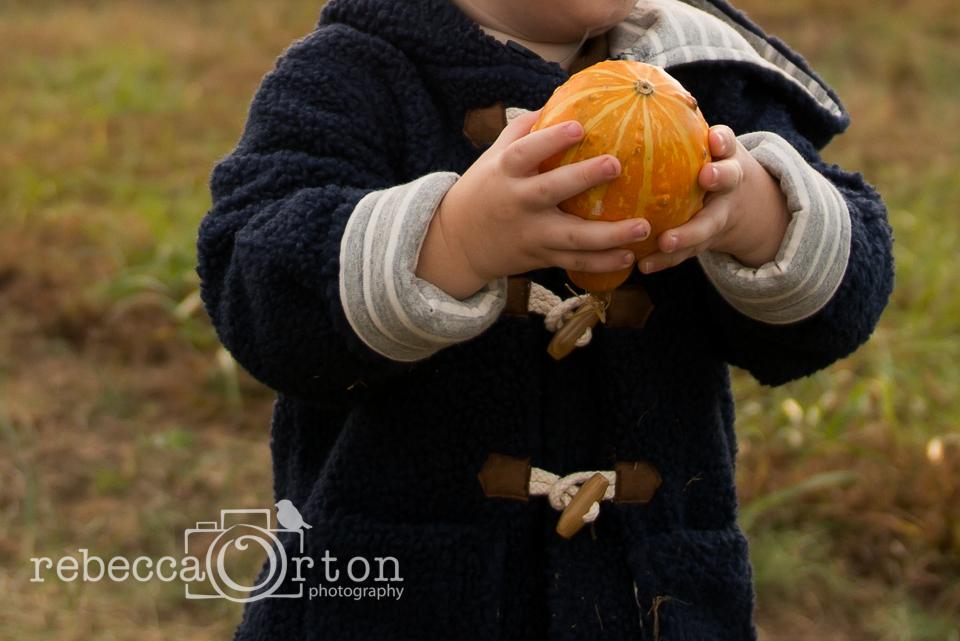 10-pumpkins2013.jpg