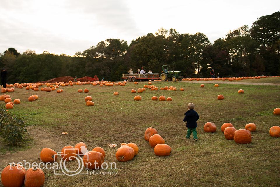 11-pumpkins2013.jpg