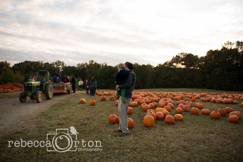 17-pumpkins2013.jpg