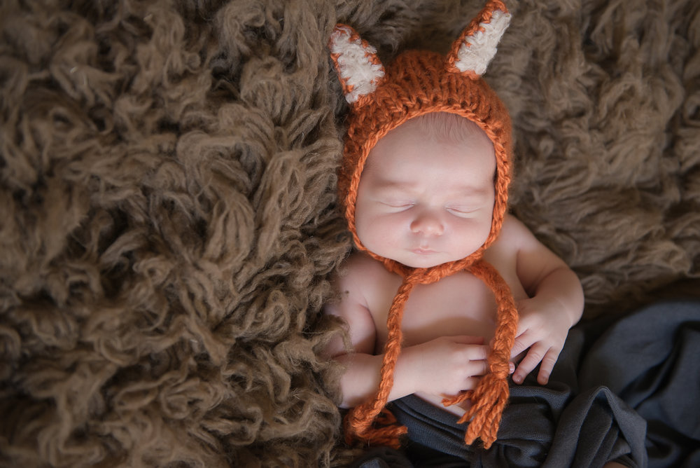 newborn boy fox