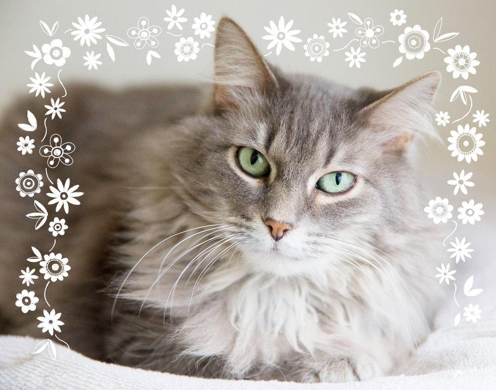 2018 Cat Calendar.jpg
