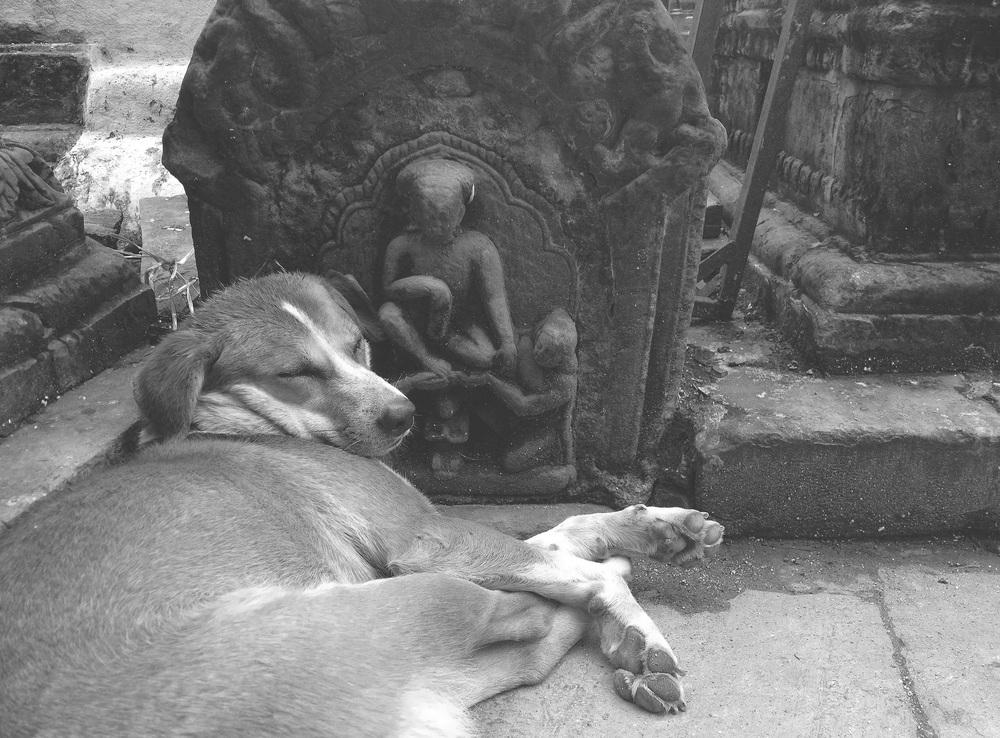 Meditating dog in Kathmandu