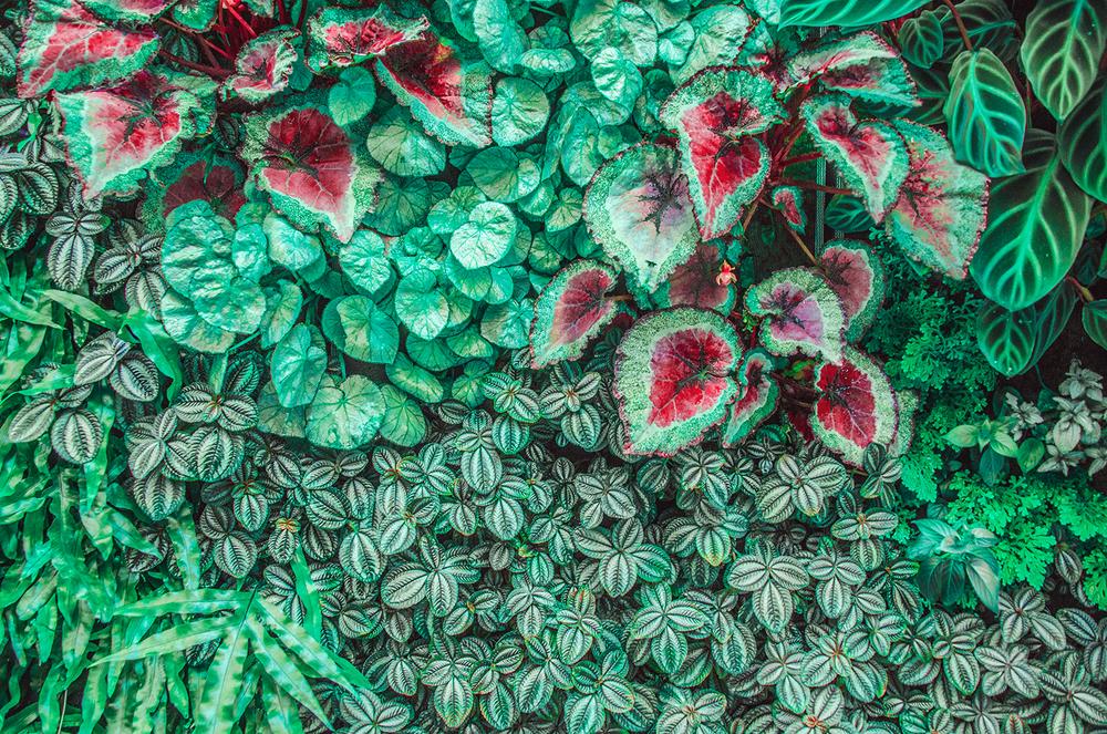 Botanical-Print,-Mint,-Ruby-Red,-Garden,-Tropical-Fine-Art-Photography.jpg