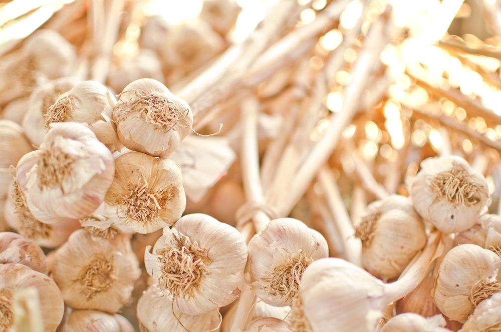 Fresh-Garlic-Still-Life,-Gourmet,-French-Open-Air-Market,-Farmers-Market,-Kitchen,-Dining,-Fine-Art-Photography.jpg