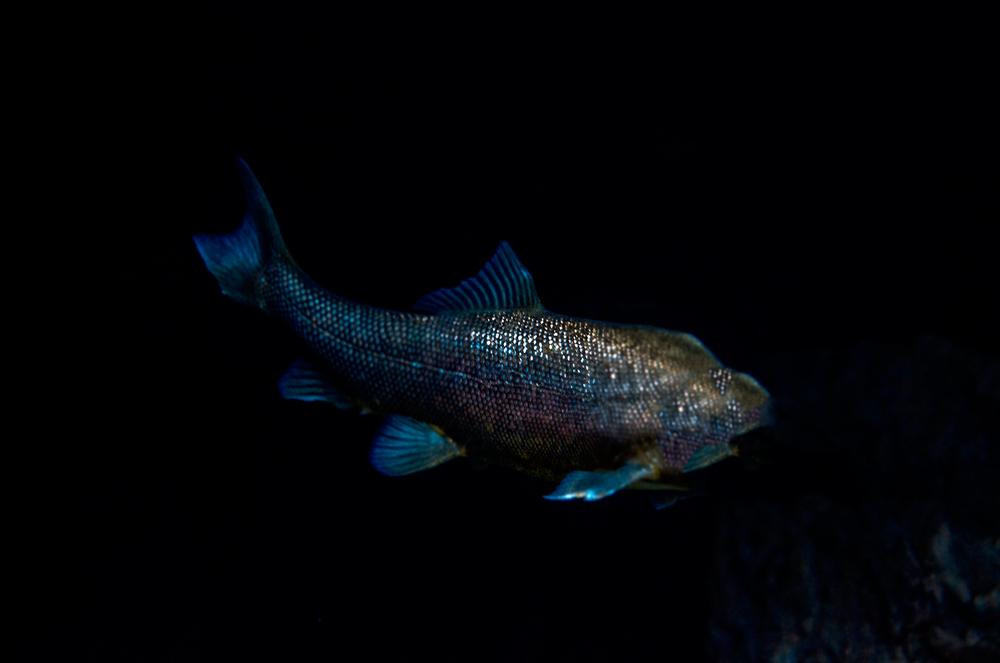 Sparkle-Fish,-Marine-Nature-Photo,Turquoise,-Aqua,-Water,-Fishing,-Summer,-Lake.jpg