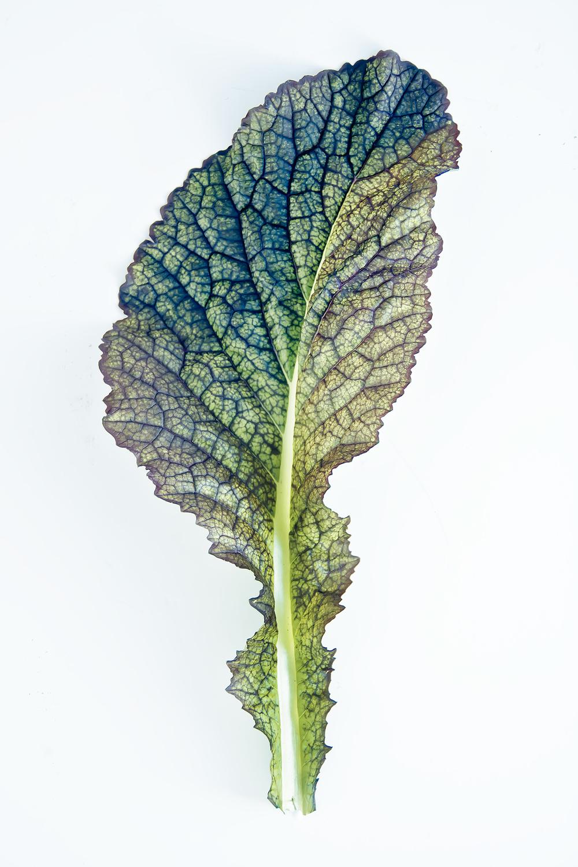 Opalescent-Translucent-Mustard-Leaf,-Elegant-Gourment-Fine-Art-Print,-Macro-Texture,-Simple,-Minimal,-Green-8x12-Photo.jpg
