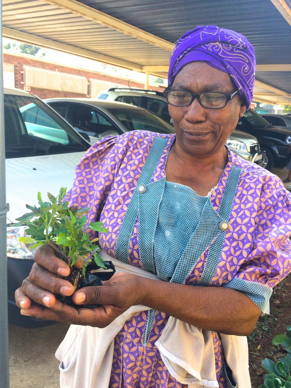 One of our Granny Gardeners humming a welcome song to our new batch of organic tomato seedlings donated by Ball Straathof nursery.