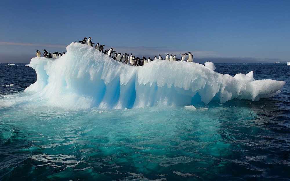 antarcticwith-penguins-on-a-ice-floe-wide.jpg