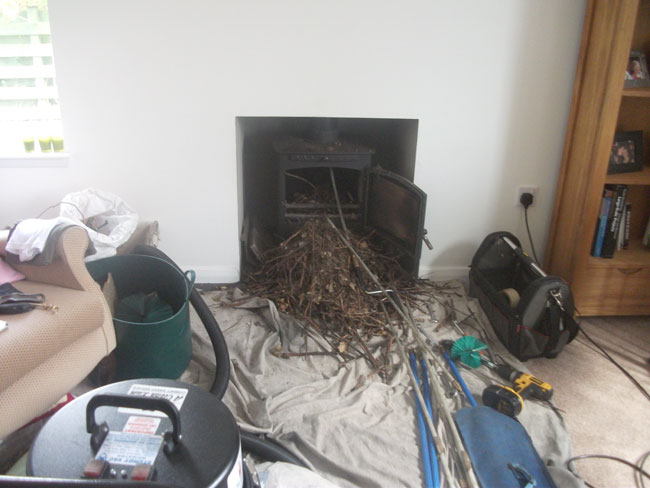 A bird nest blockage.