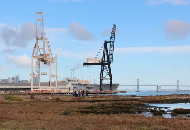 Pier 94: By the People, For the Birds. Volunteers transformed an industrial dump in San Francisco into thriving wetland bird habitat. Bay Nature & SF Public Press -