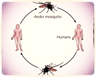We Could Probably Predict Zika Outbreaks if Humans Weren't so Unpredictable: How human behavior complicates the impacts of climate change. For FiveThirtyEight. -