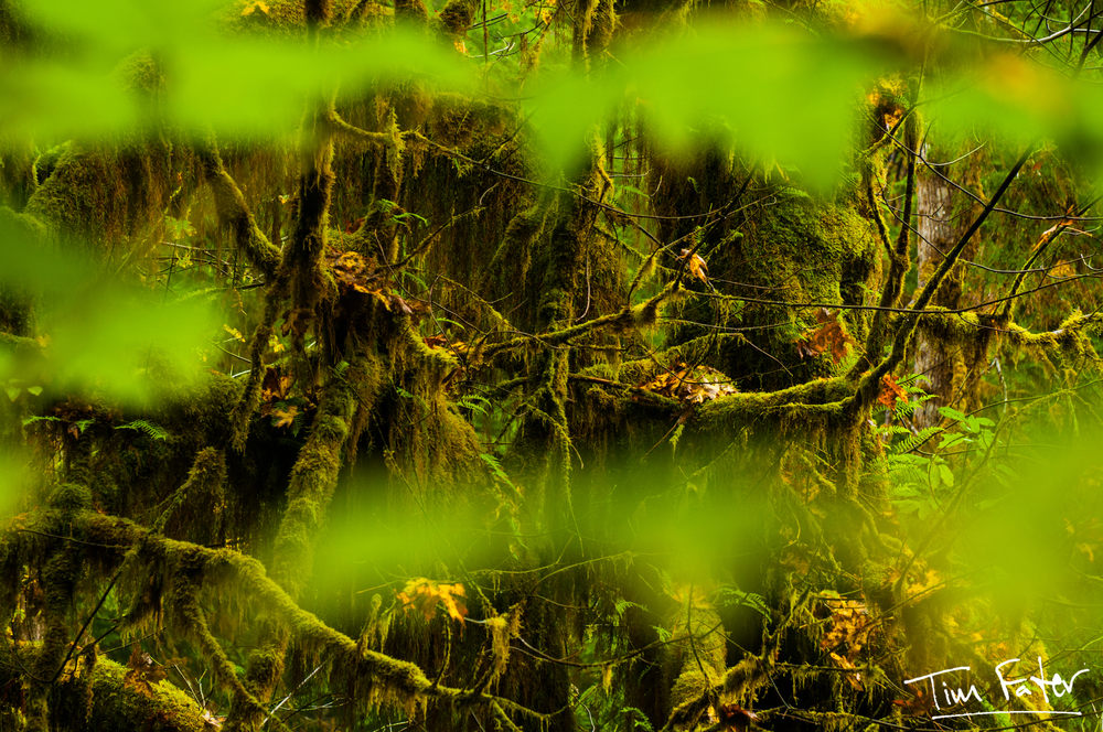 TimFater.com-3658.jpg
