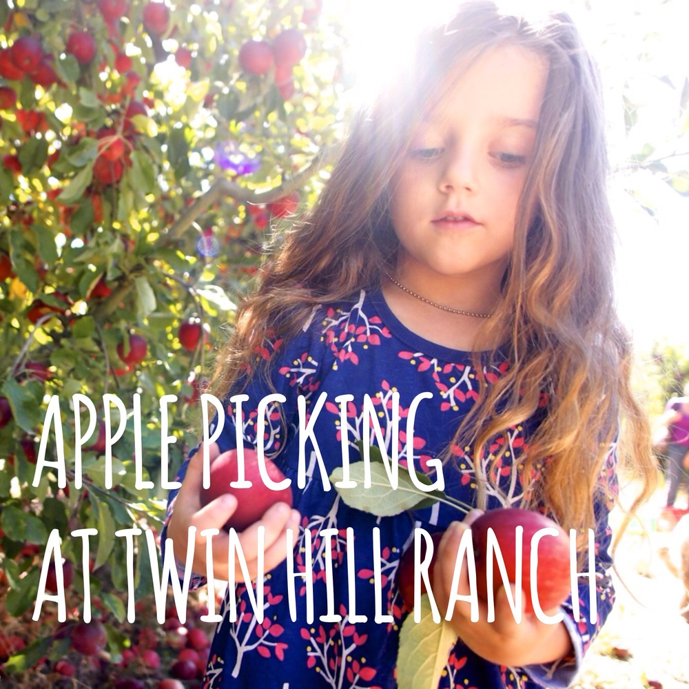 Apple Picking at Twin Hill Ranch in Sebastopol, CA.