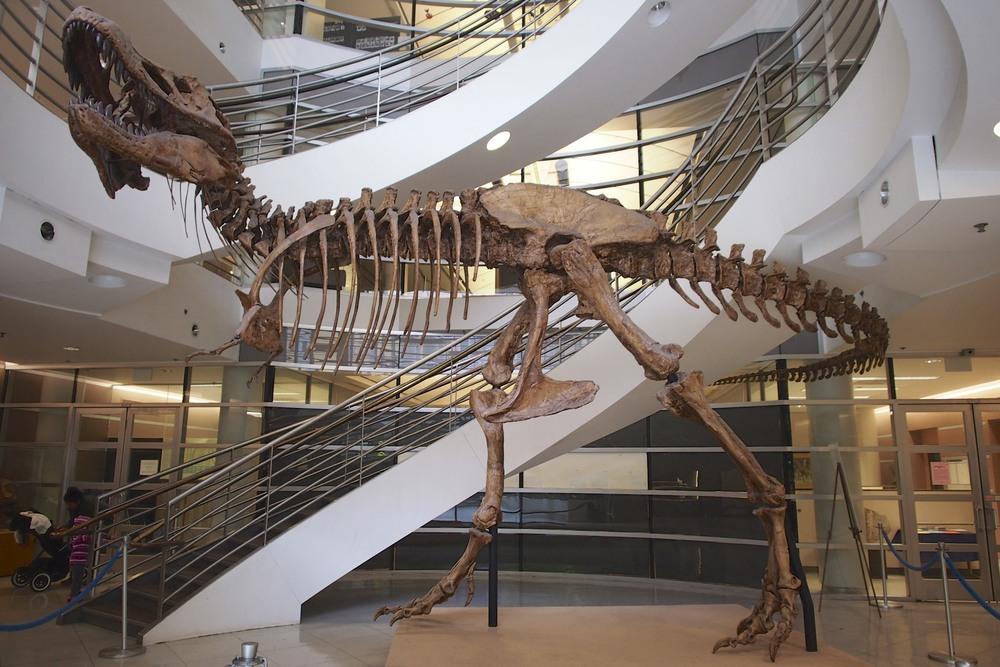 Meet the T-Rex named Osborn.