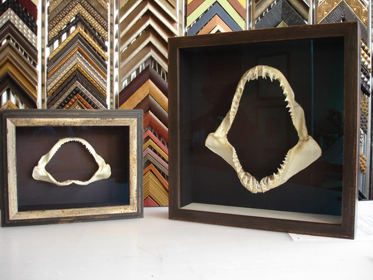 shark jaw shadowbox framing
