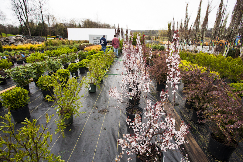 Nursery Grade Trees, Shrubs & Perennials