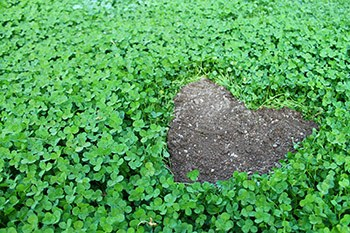 Clover_Heart_by_Mev.jpg