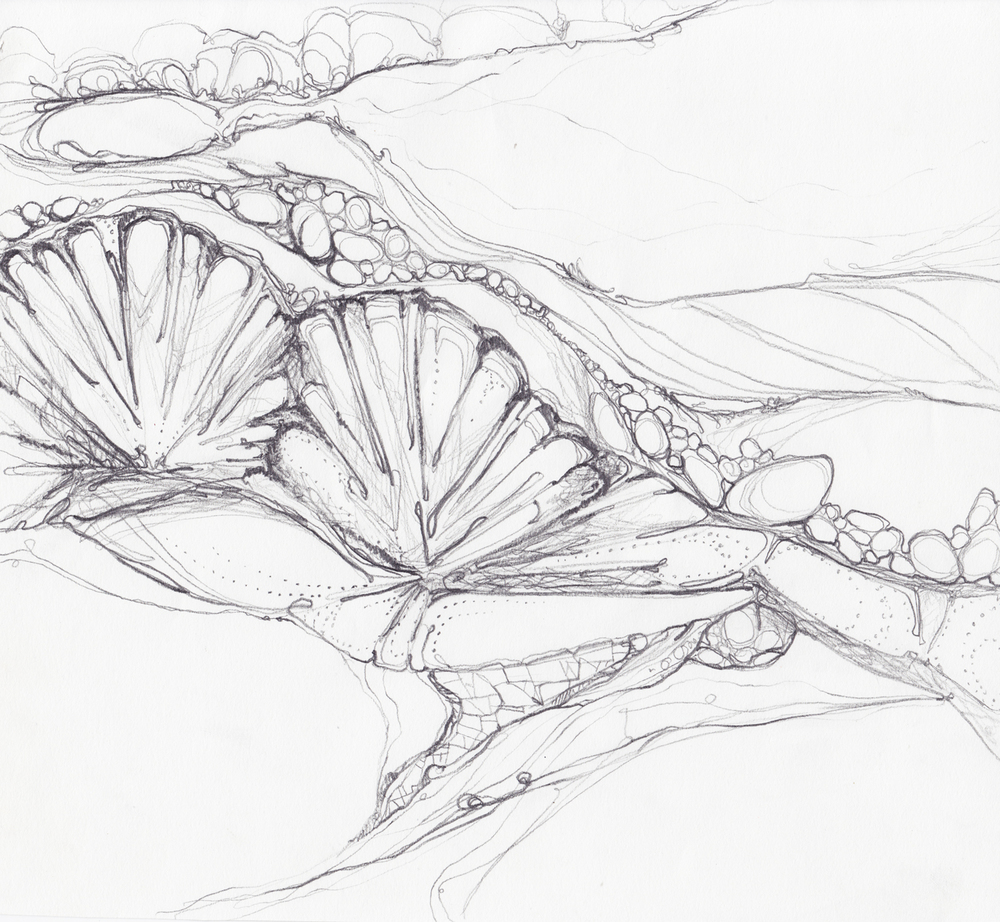 rocks-shell-sketch.jpg