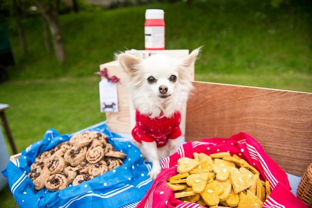 Gemma Klein Photography - Pets (4).JPG