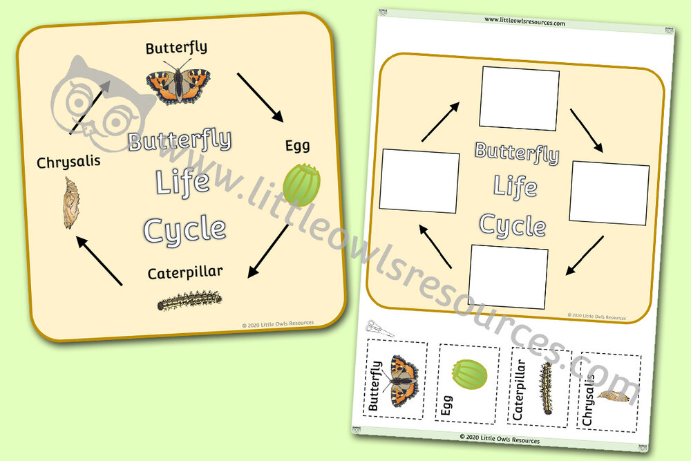 Butterfly Life Cycle Poster and Activities