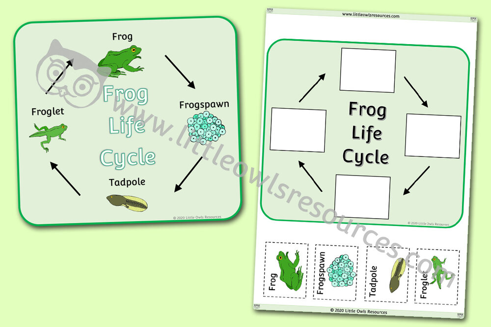 Frog Life Cycle Poster and Activity