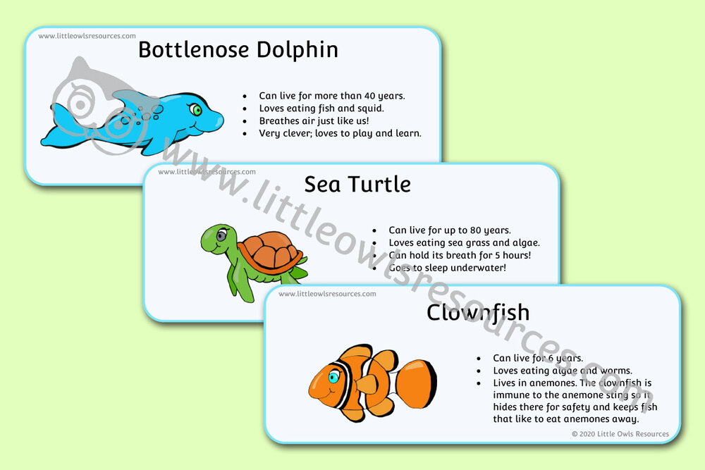 Sea Animal Fact Cards