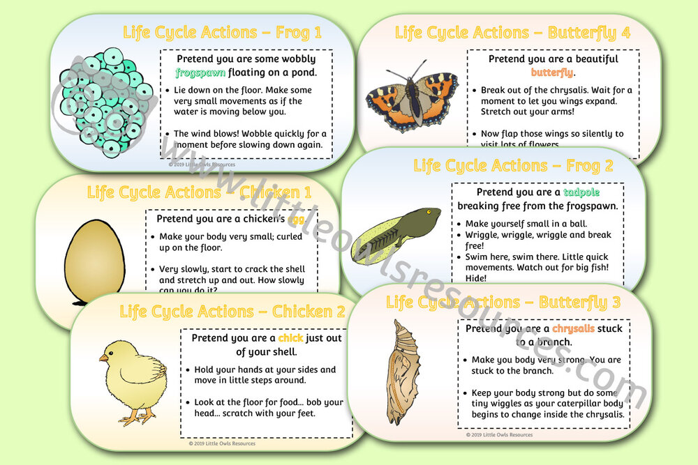 Life Cycle Movement Cards