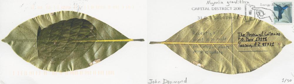 John Deamond