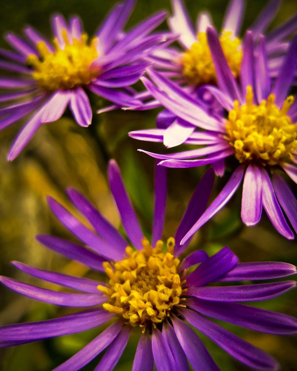 Keen-EyePhoto-dot-com_Flowers (14).jpeg